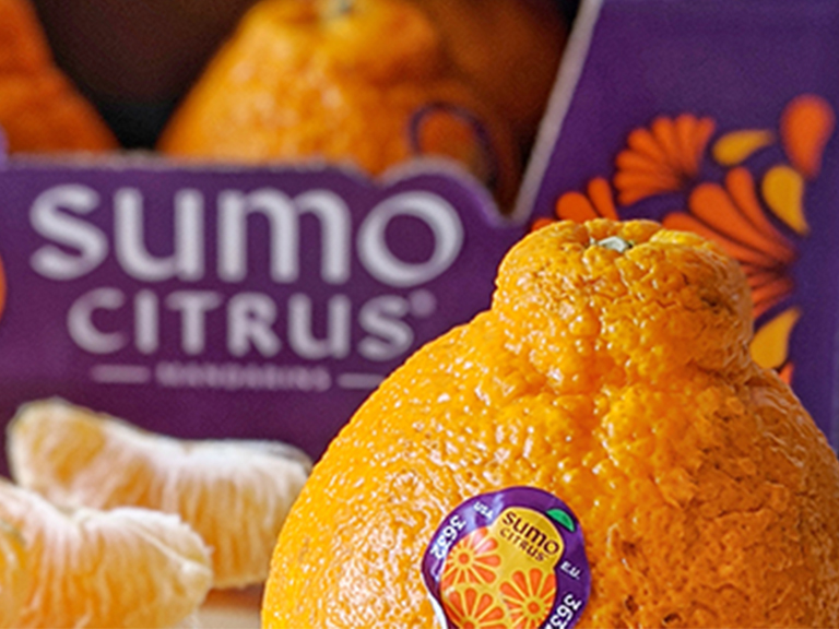 Sumo Citrus available now!